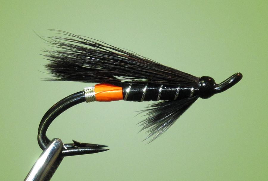 Black Bear Orange Butt