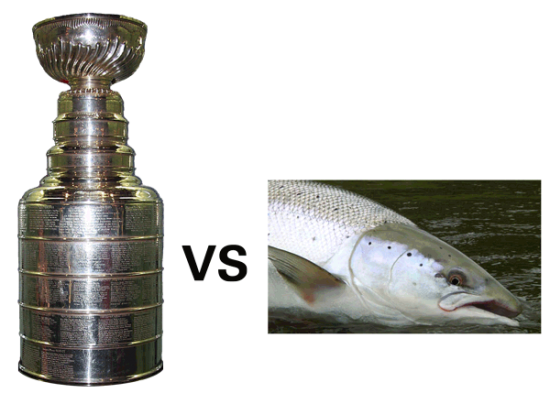 cup or salmon