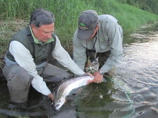 alan_salmon